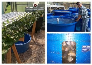 Aquaponics Setup- Fish for Aquaponics