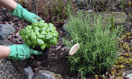 Easy-to-Grow Organic Crops