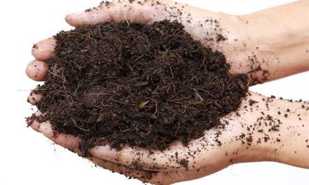 Preparing the Soil for Organic Gardening