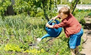 Learning When to Water Your New Vegetable Plants