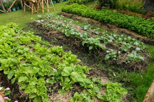 Create Your Own No-Dig Garden