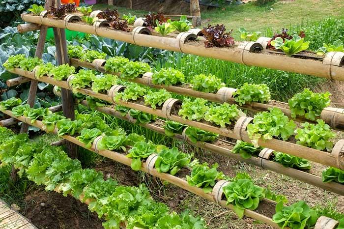 Make a Vertical Organic Garden