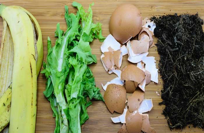 Best Organic Fertilizers for Your Garden