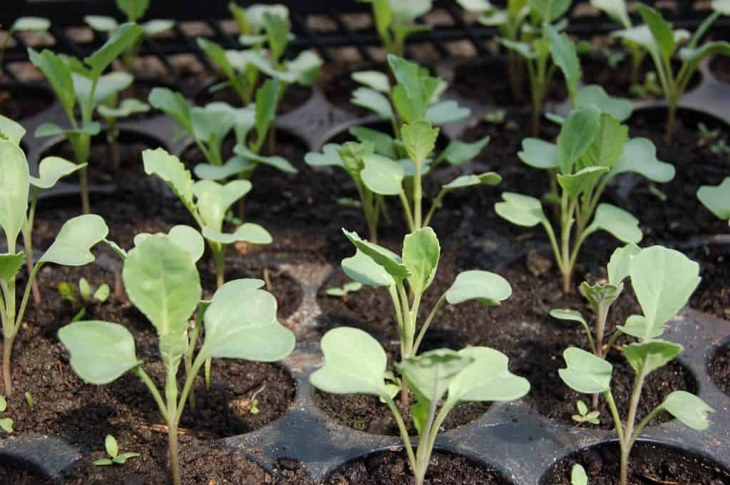 Seedlings in a Garden