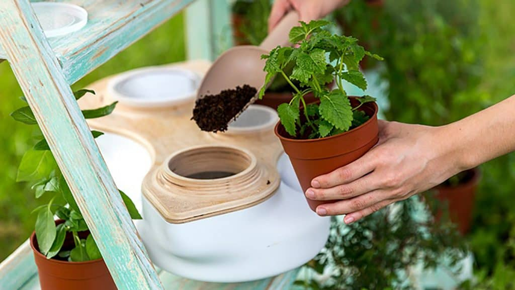 Compost for your potplants