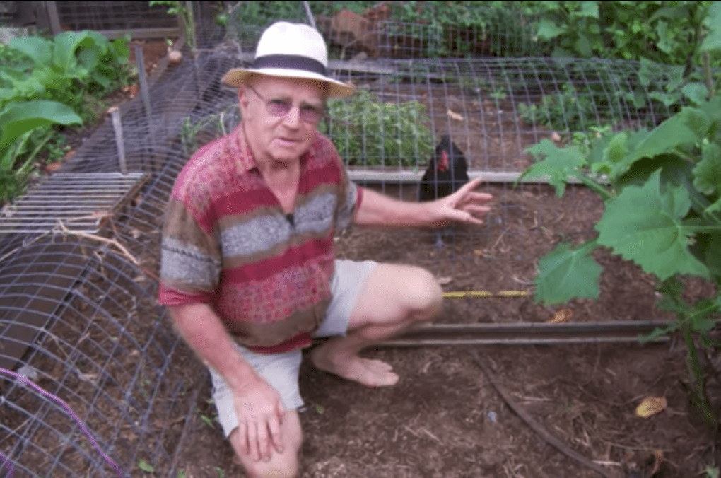 ChookTunnelSystem - Gardening with Chickens